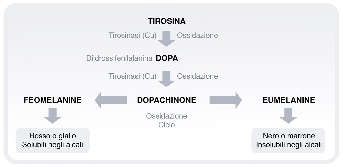 Genesi del Melasma e dell'iperpigmentazione della pelle